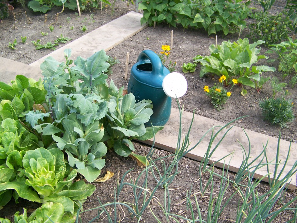 Garden Plot Photos 009